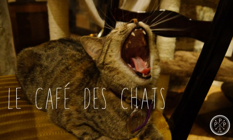 Le Cafe des Chats (header)